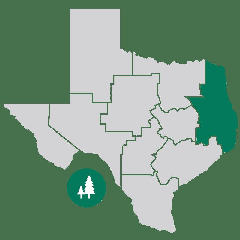 Forest Trail Region